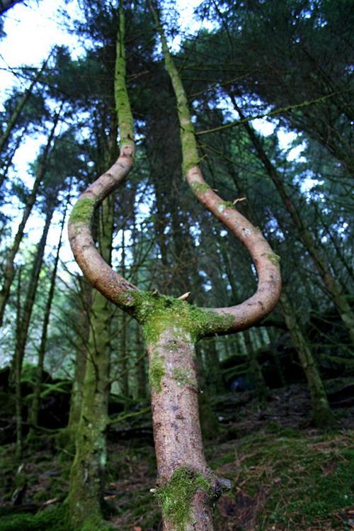 Unusual things in nature