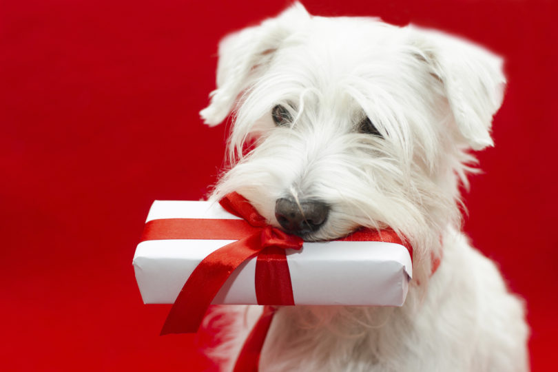 10 Weird (And Super-Awesome!) Gifts for Animal Lovers ...
